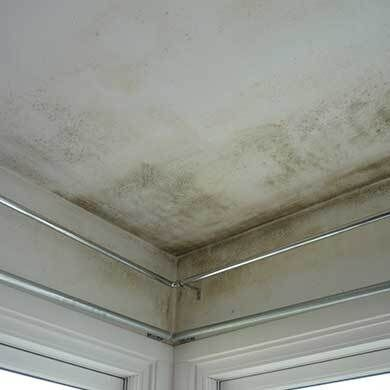 mouldy-ceiling